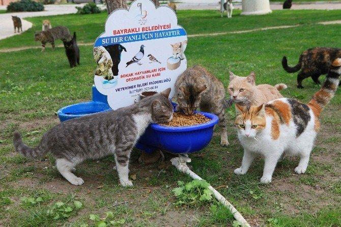 Bayraklı'da sokak hayvanlarına yakın ilgi