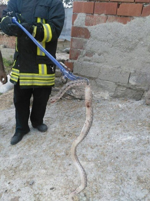 Eve giren yılanları itfaiye ekipleri yakaladı
