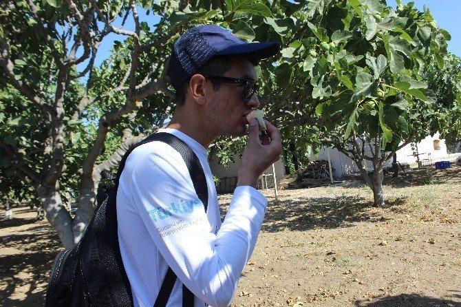 Dünya gençleri Aydın'da incir tadında bir gün yaşadı