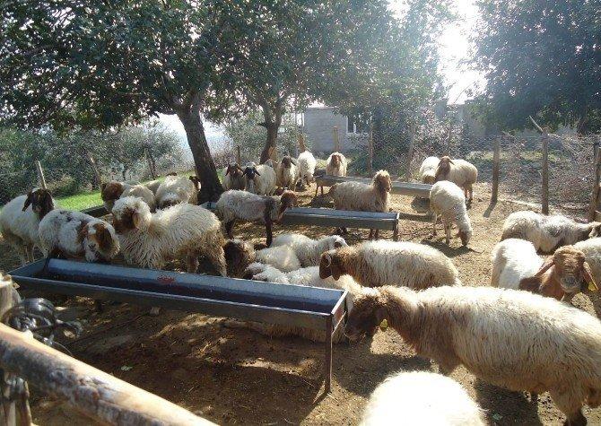 Bakanlıktan Malatya'daki orman köylülerine 9,6 milyon TL katkı