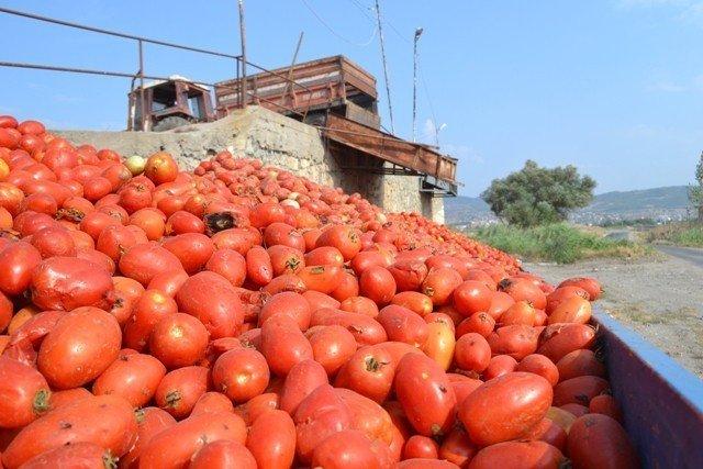 Bigadiç'de salçalık domates hasadı başladı
