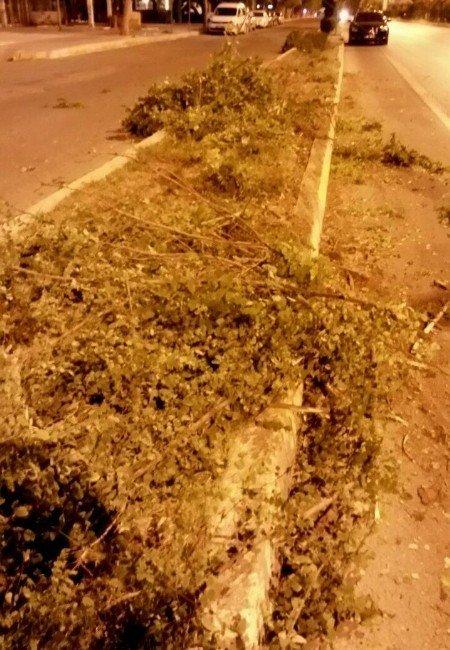 Ağaçlara çarparak durabildi
