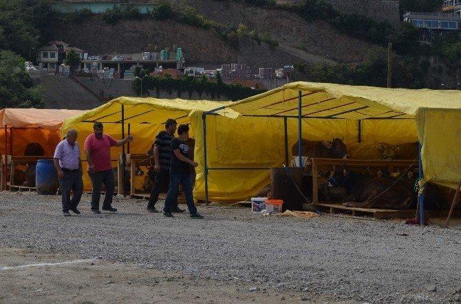 Trabzon'da kurbanlıklar pazara indi