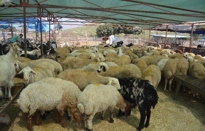 Akdeniz'de kurban satış ve kesim yerleri hazırlandı