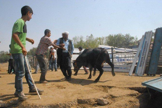 Diyarbakır Hayvan Borsası Kurban Bayramı'na hazırlanıyor