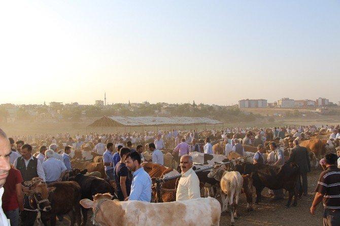 Hayvan yetiştiricileri hayvan pazarına bakım istiyor