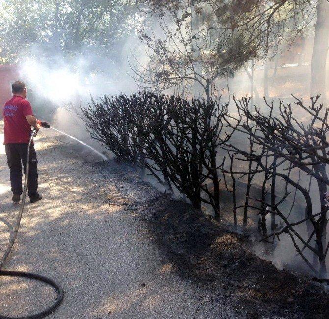 Okul bahçesindeki ağaçlık alan yandı
