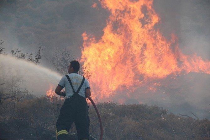 Bodrum'da 7 dönüm alan kül oldu