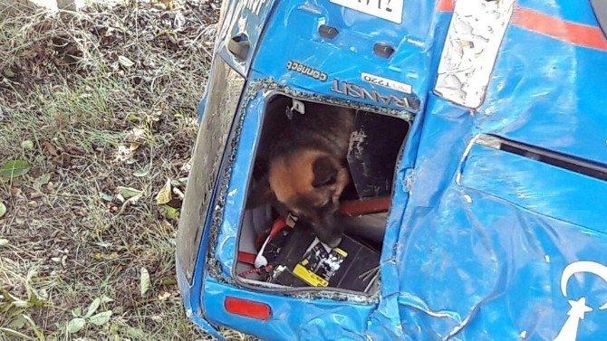 Jandarma aracı kaza yaptı, komutanlar köpek için seferber oldu