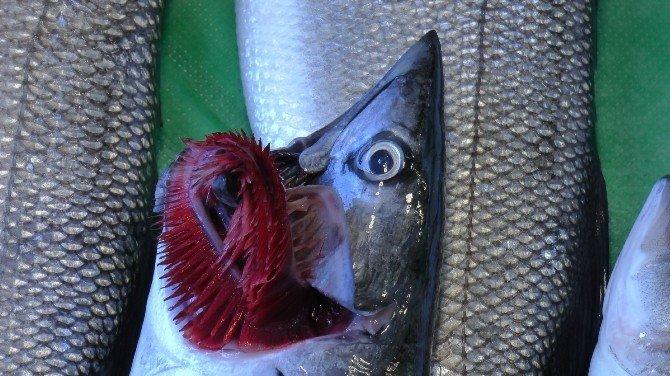 Uzmanlar vatandaşlara haftada en az 2 defa balık tüketmelerini öneriyor