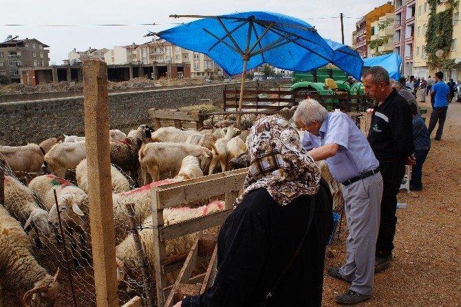 Lapseki'de kurban pazarı