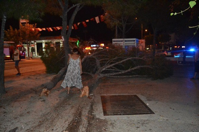 Lastiği patlayan araç ağaçlara çarptı: 4 yaralı