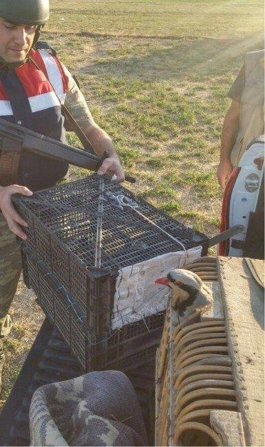 Güroymak'ta kaçak avcılara suçüstü