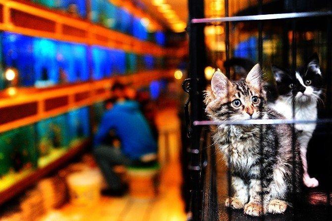 Pet shop sahiplerine sertifika eğitimi zorunlu