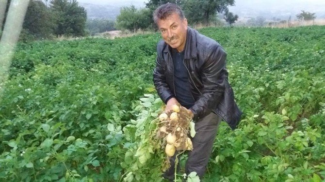 """Türkiye'nin ilk """"beyaz patates"""" hasadı yapılacak"""