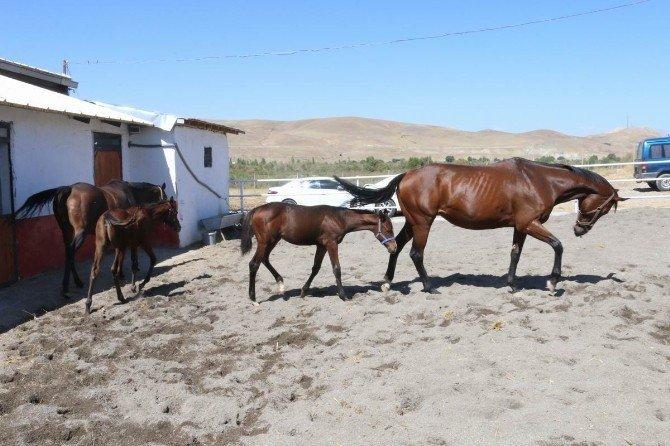 Erzincan'a Hipodrom Yapılacak