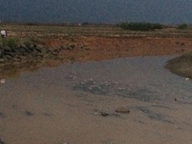 İslahiye'de sulama kanalında balıklar kıyıya vurdu