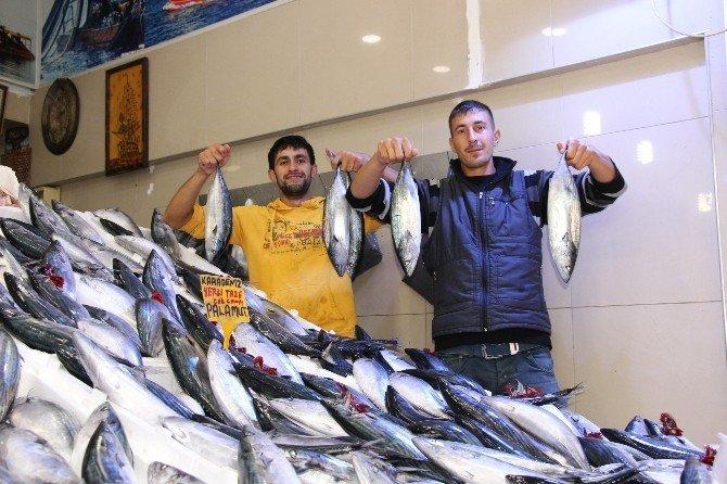 Palamut bolluğu balıkçıları düşündürüyor