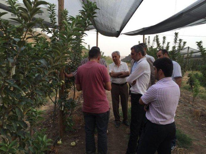 Kurtalan'da fıstık ve elma hasadı yapıldı