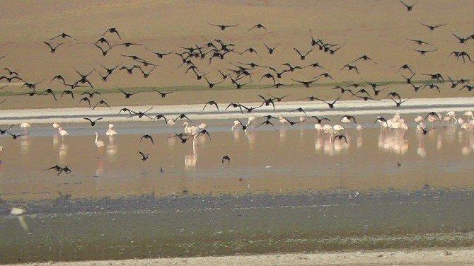 Düden Gölü'ne yaban kazları gelmeye başladı
