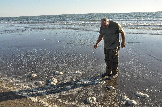Tarsus sahilindeki balık ölümleri araştırılıyor
