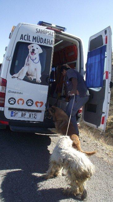Akseki'de ölüme terk edilen köpeklere Büyükşehir sahip çıktı