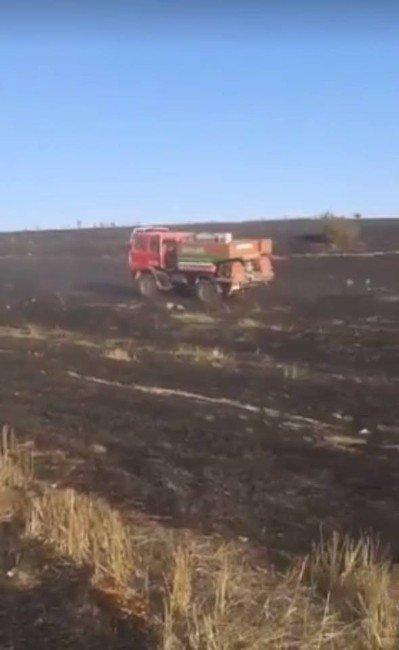 Anız yangınından sıçrayan alevler ağaçlandırma sahasındaki fidanları kül etti