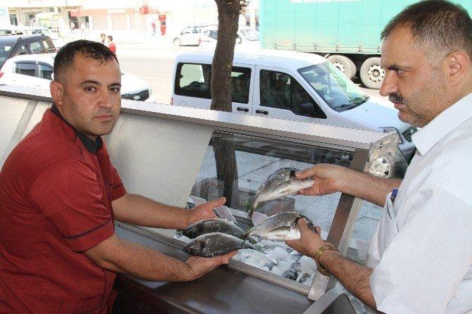 Silopi'de balık satışları esnafı sevindirdi