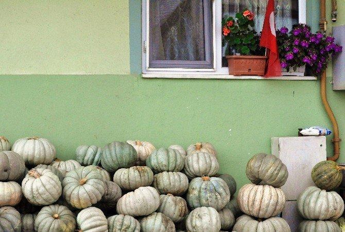 Sakarya'da balkabağı hasadı başladı