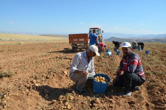 Patates üreticileri dertli