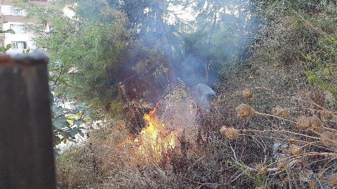 Tartıştığı şahıslara kızıp çam ağaçlarını yaktı