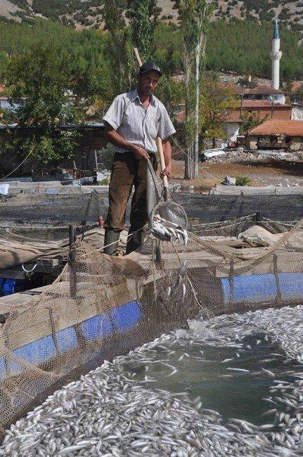 Alabalık tesisinde yaklaşık 1,5 milyon balık telef oldu