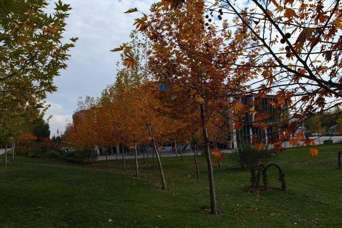 Üniversitede 28 bin 64 ağaç boy gösteriyor