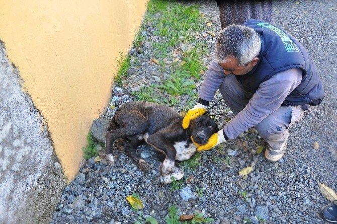 Yaralı köpek için  ambulans çağrıldılar
