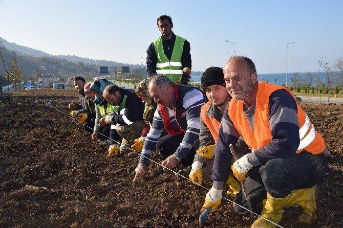 Türkiye'nin ilk ısırgan otu tarlası Giresun'un Görele ilçesinde kuruldu