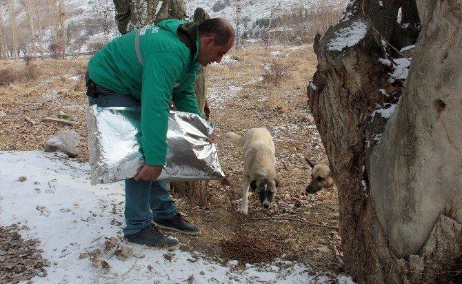 Çankaya Belediyesi'nden sokak hayvanlarına kuru mama
