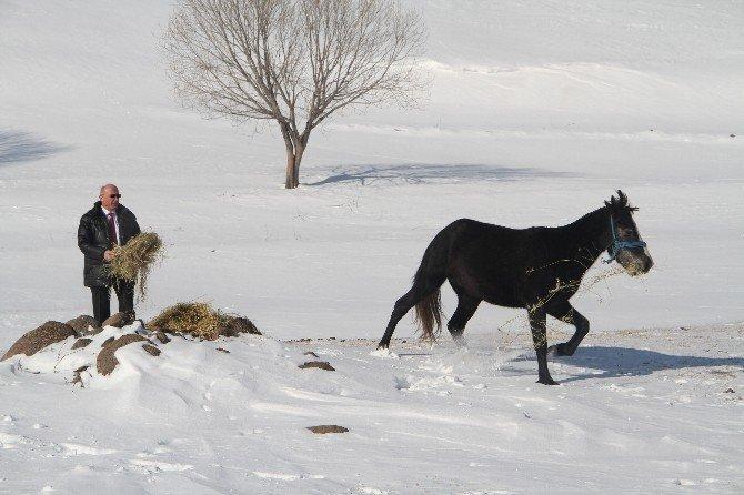 Yılkı atlarının yaşam mücadelesi