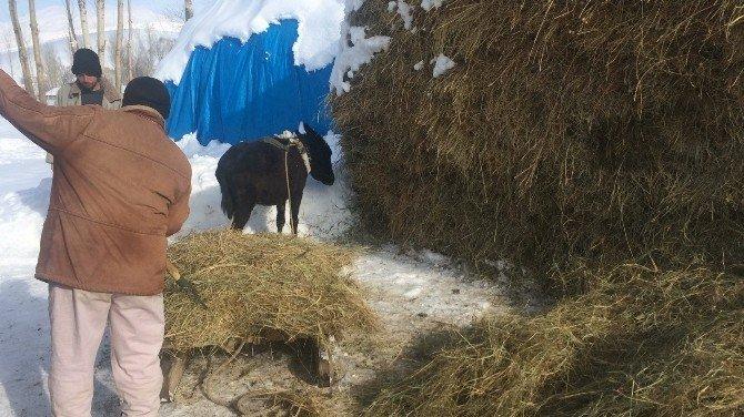 Vanlı köylünün kış çilesi