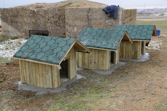 Krıklareli Belediyesi'nden sokak hayvanlarına ev