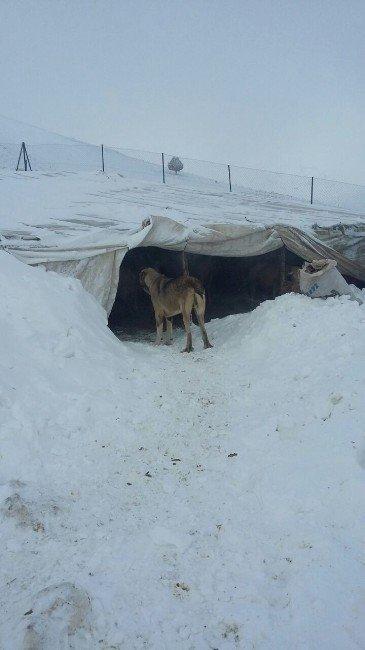 Antalya Korkuteli'nde karda mahsur kalan 3 çoban ve koyunları kurtarıldı