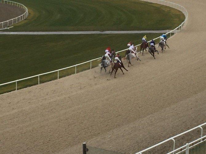 İzmir'de atlar Milas için koştu