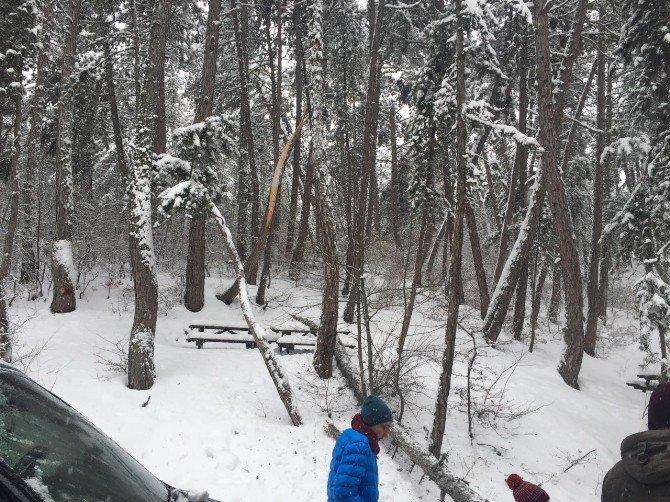 Haberal'ın aracının önüne ağaç devrildi