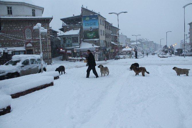 Tosya'da aç kalan sokak köpeklerini vatandaşlar besledi