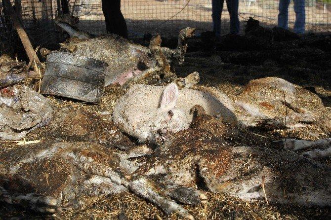 Ahırda çıkan yangında 20 küçükbaş hayvanlar telef oldu