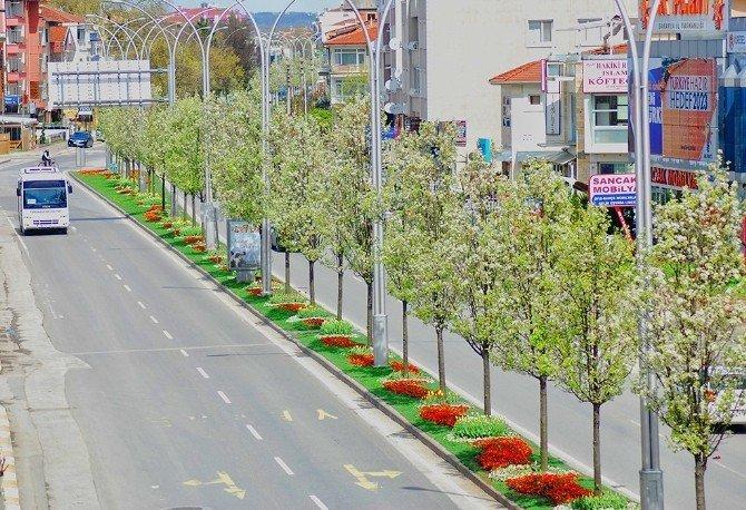 Yeşil alanlarıyla büyüyen şehir Sakarya