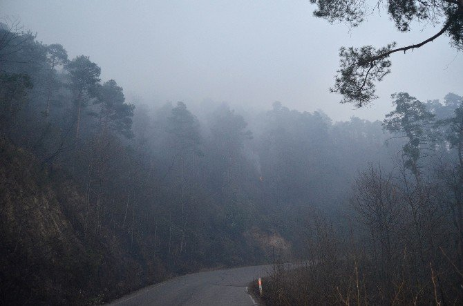 Günün ağarmasıyla Trabzon'daki yangının boyutu ortaya çıktı