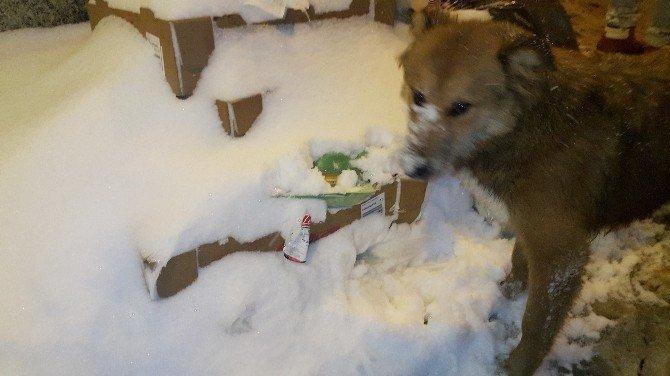 Hayvanlar kar altında yemek aradı