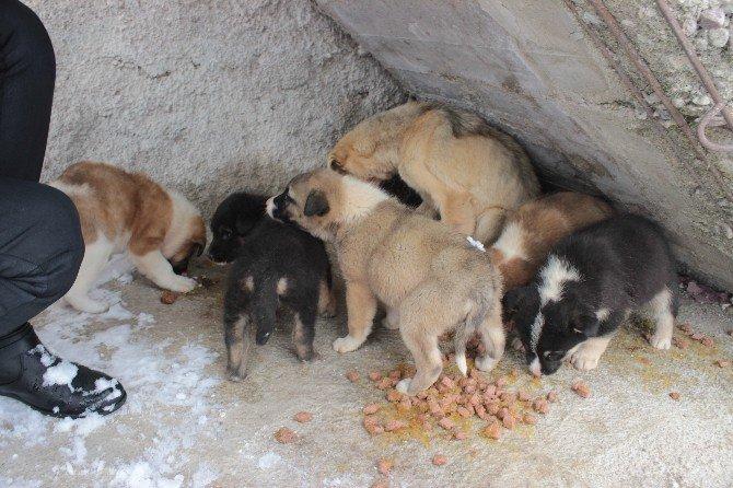 Tavşanlı'da köpeklerin soğuktan ve açlıktan öldüğü iddiası