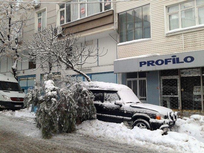 Çam ağacı aracın üzerine devrildi