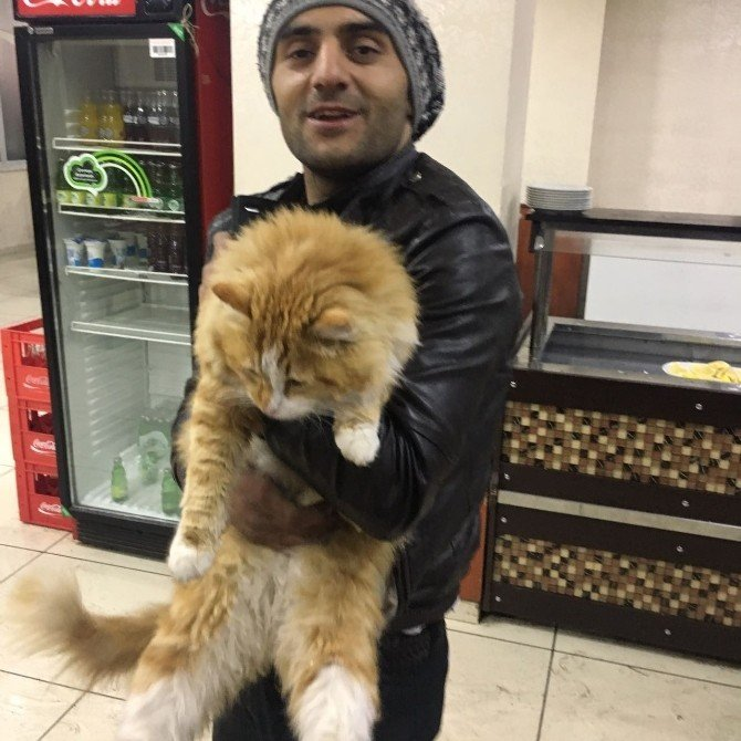 Her yerde dedesinden kalma kedisini arıyor